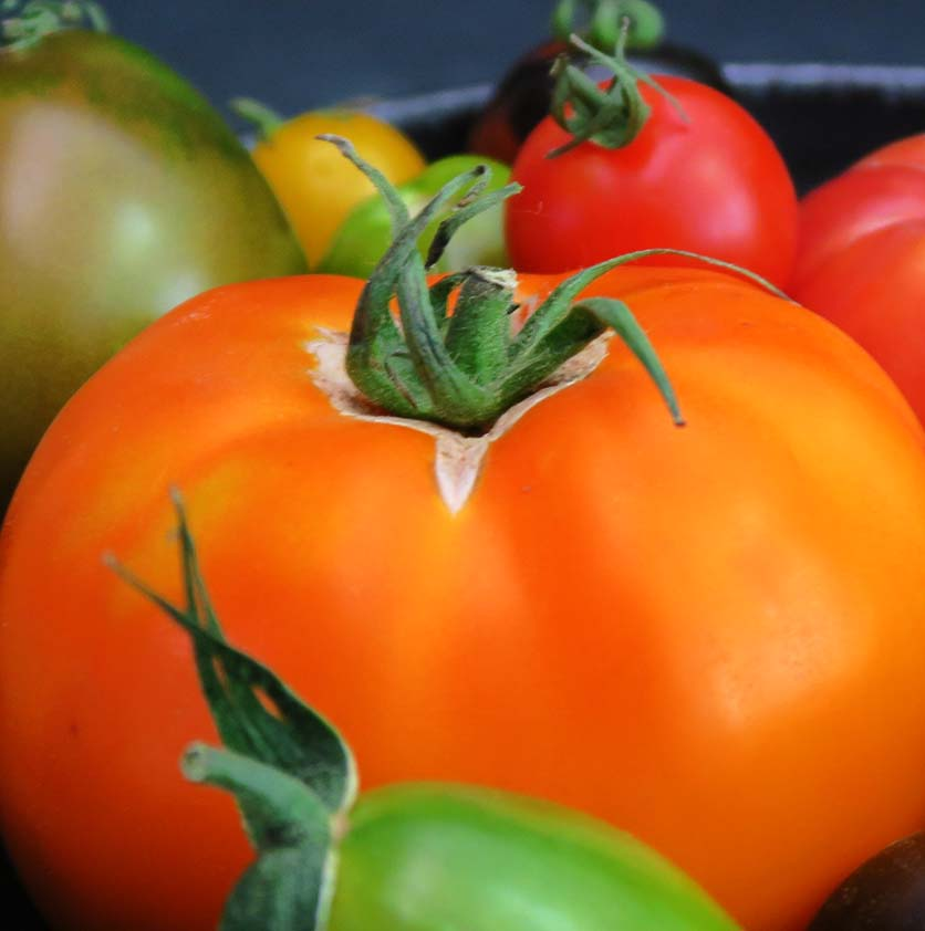 blog)cropped_close_up_tomatoes_IMG_2865
