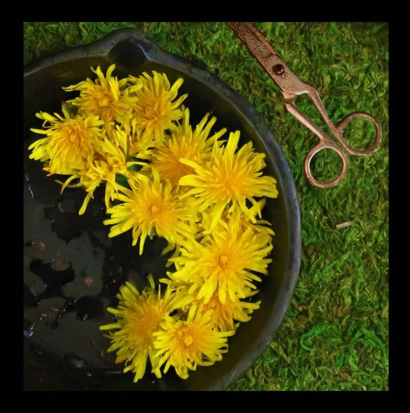 black_1080_grass_leaves_scissors_IMG_1388